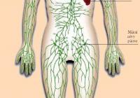 Lymfatický systém organismu
